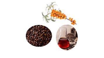 The Pharmacological Effects of Sea Buckthorn Juice